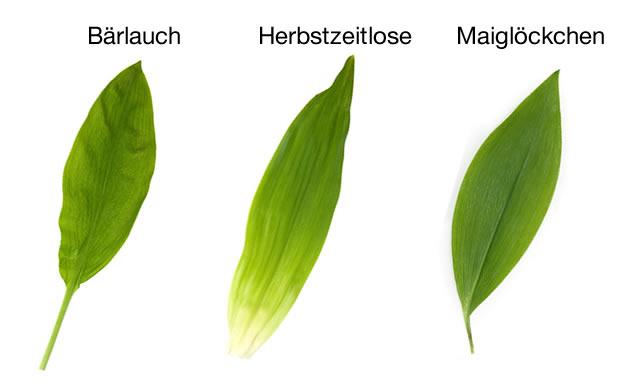 Barlauch Florence Kocht